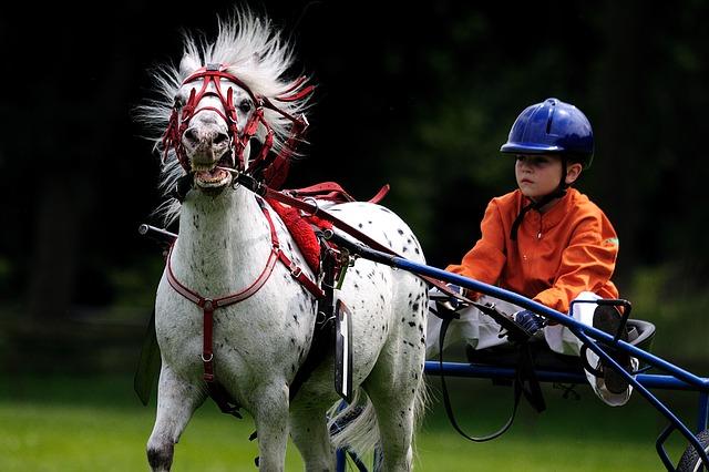 Pony, Sulky und Fahrer